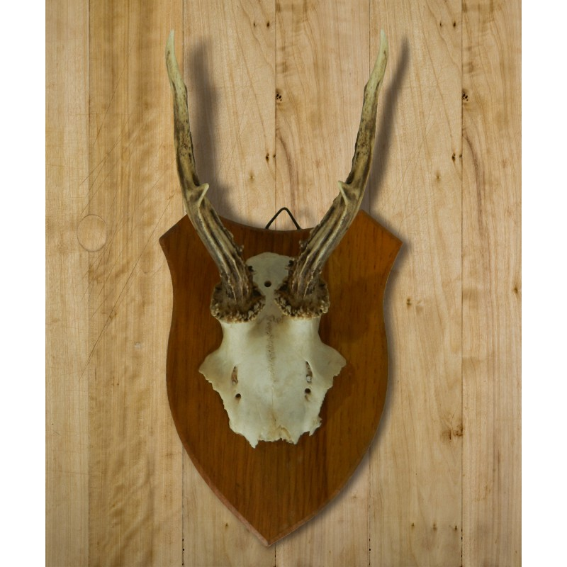 Wall decoration of deer hunting trophy mounted on wood for Decoration murale helline
