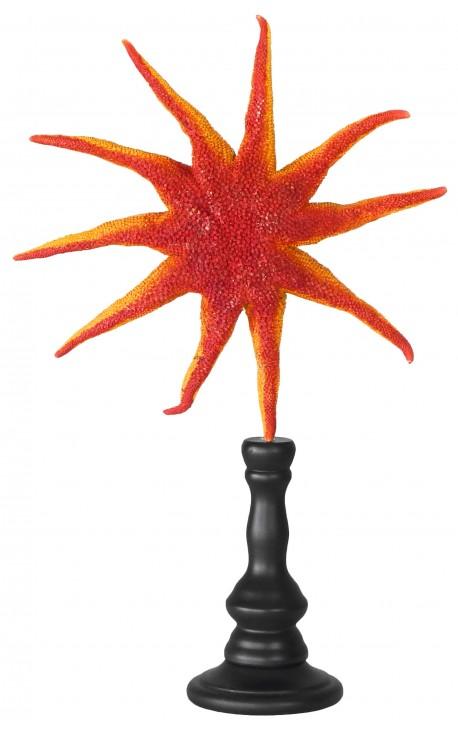 Grande étoile de mer soleil sur balustre en bois