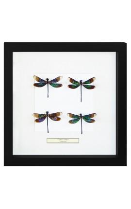 """Cadre décoratif avec 4 libellules """"Euphae Refulgens"""""""
