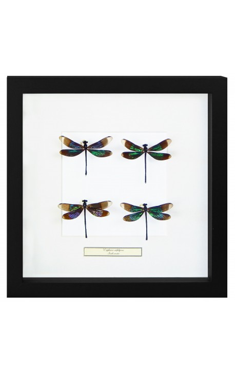 "Cadre décoratif au décor de 4 libellules ""Euphae Refulgens"""