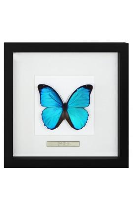 """Cadre décoratif avec papillon """"Morpho Menelaus"""""""