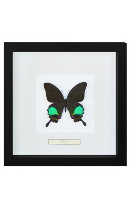 "Cadre décoratif avec papillon ""Karna"""