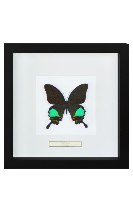 "Decorative frame decor 4 dragonflies ""Euphae refulgens"""