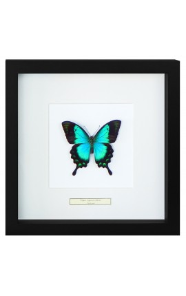 "Decorative frame with a butterfly ""Lorquianus Albertisi"""