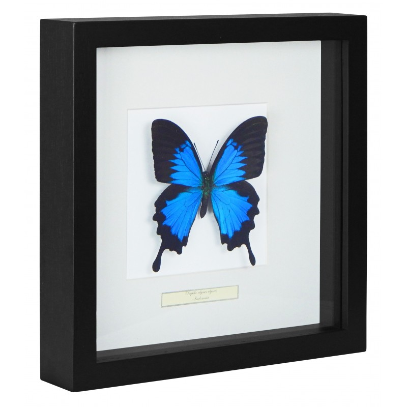cadre d coratif avec un papillon ulysses ulysses. Black Bedroom Furniture Sets. Home Design Ideas