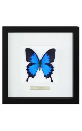 """Cadre décoratif avec un papillon """"Ulysses Ulysses"""""""