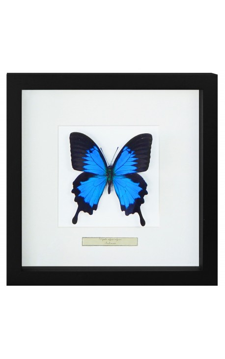 "Decorative frame with a butterfly ""Ulysses Ulysses"""