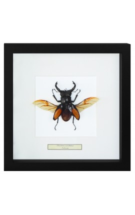 "Decorative frame with a beetle ""Hexatrius mandibularis"""