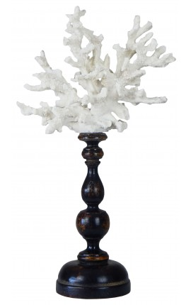 Coral mounted on wooden pedestal