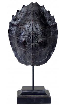 Carapace de tortue noire sur socle en bois