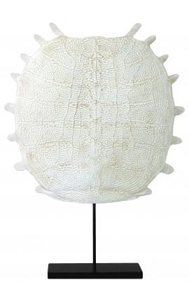 Squelette de tortue sur socle en métal