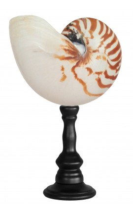 Large natural nautilus on wooden baluster