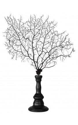 Gorgone noir (corail) sur balustre en bois
