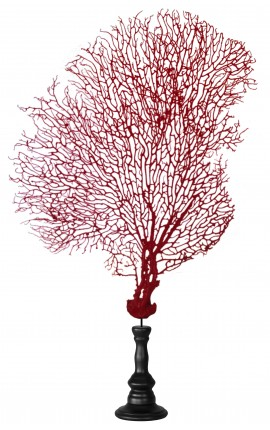 Red gorgonian (coral) on a wooden baluster