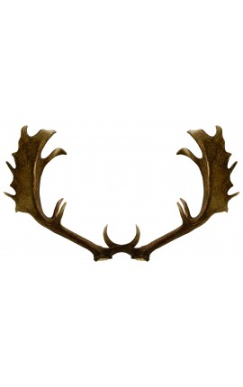 True horn antler from deer for wall decoration