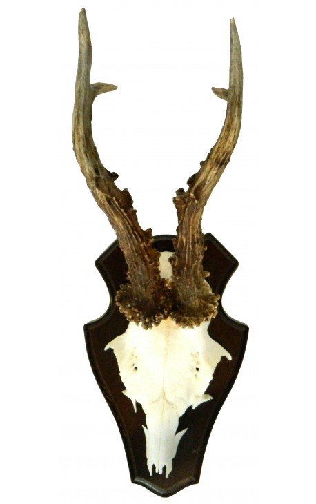 Wall decoration of deer hunting trophy mounted on wood