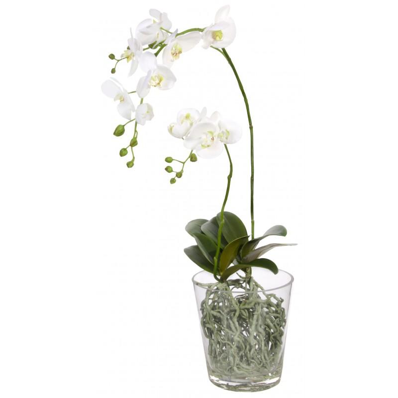 orchid 233 e blanche phalaenopsis en tissu dans pot en verre transparent