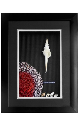 Frame with shells and coral