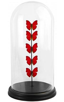 Papillons rouges présentés sous globe en verre