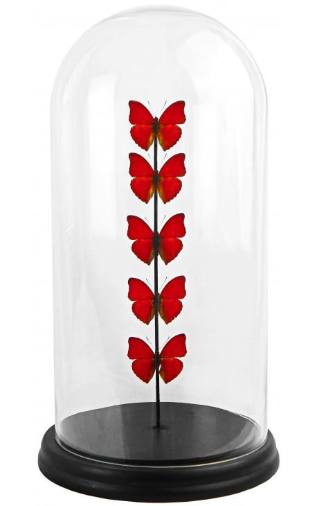 Red butterflies presented in a glass globe