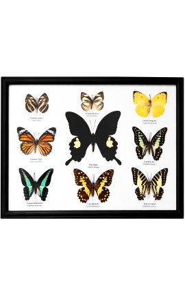 Grande cadre décoratif avec ensemble de papillons