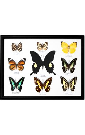 Large set of decorative frame with butterflies
