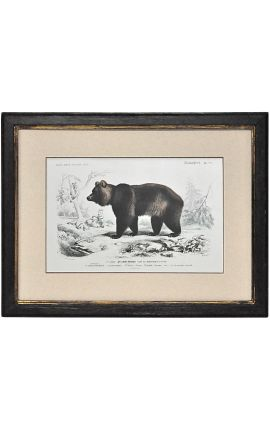 Patinated black frame with gilded polychrome engraving gouache: Brown bear