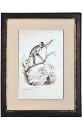 Cadre noir patiné doré avec Gravure polychrome : La Guenon et son bébé