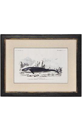 Cadre noir patiné doré avec Gravure polychrome : La Baleine