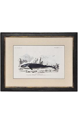 Patinated black frame with gilded polychrome engraving gouache: The Whale.