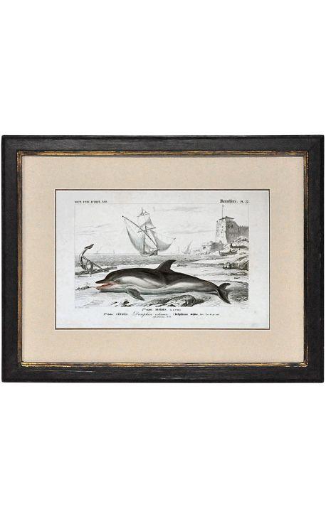 Cadre noir patiné doré avec Gravure polychrome : dauphin