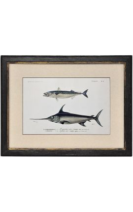 Black frame with gold patinated polychrome engraving gouache: mackerel and swordfish