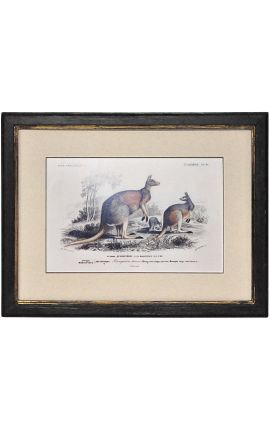Patinated black frame with gilded polychrome engraving gouache, representing a couple of woolly kangaroos