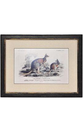Cadre noir patiné doré avec gravure polychrome à la gouache, représentant un couple de kangourous laineux