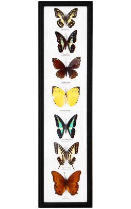 Cadre décoratif rectangulaire avec ensemble de papillons