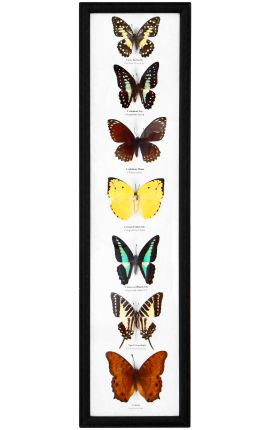 Decorative rectangular frame with a set of 7 real butterflies
