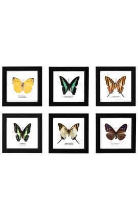 Ensemble de 6 cadre décoratif avec vrais papillons