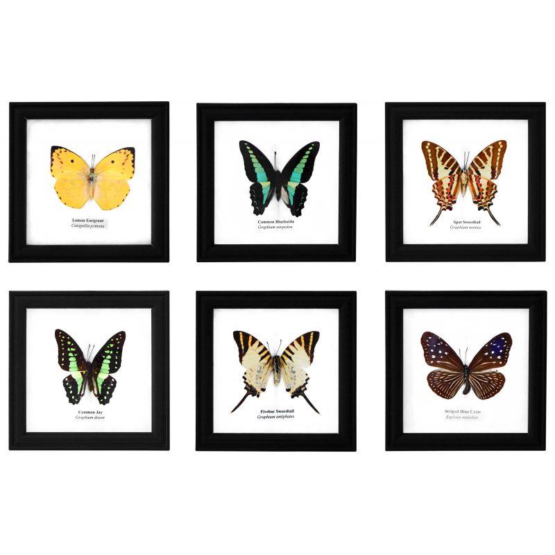 ensemble de 6 cadres d coratif avec 6 vrais papillons. Black Bedroom Furniture Sets. Home Design Ideas