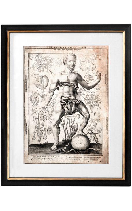 "Large antique engraving of the human body ""visio captori microcosmi prima"""