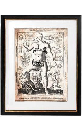 "Grande gravure antique du corps humain ""visio captori microcosmi tertia"""