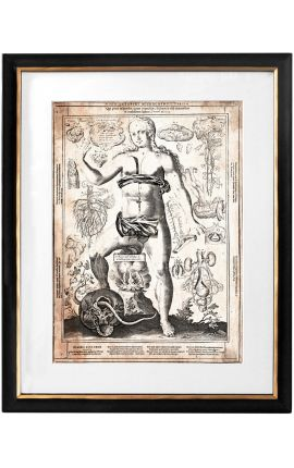 "Large antique engraving of the human body ""visio captori microcosmi tertia"""