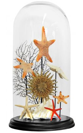 "Composition of true shells ""Starfish 1"" under a glass globe"