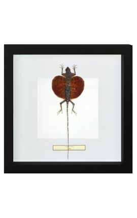 "Decorative frame with a flying lizard ""Draco Volans"""