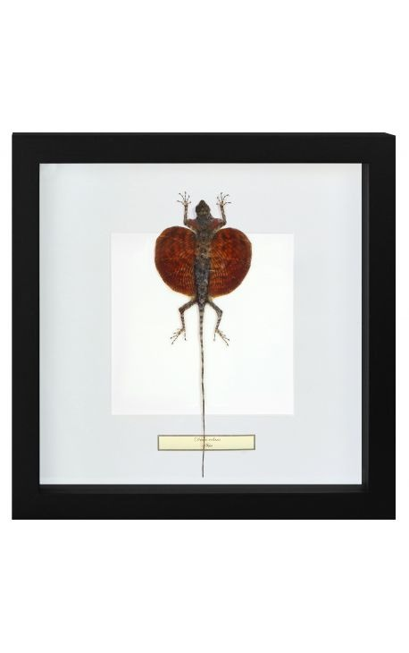 """Decorative frame with a scrab """"Draco Volans"""""""