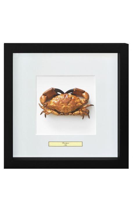 "Cadre décoratif avec crabe ""Brachyura"""