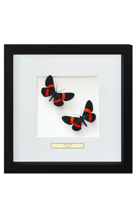 """Cadre décoratif avec papillons """"Miliona Drucei"""""""