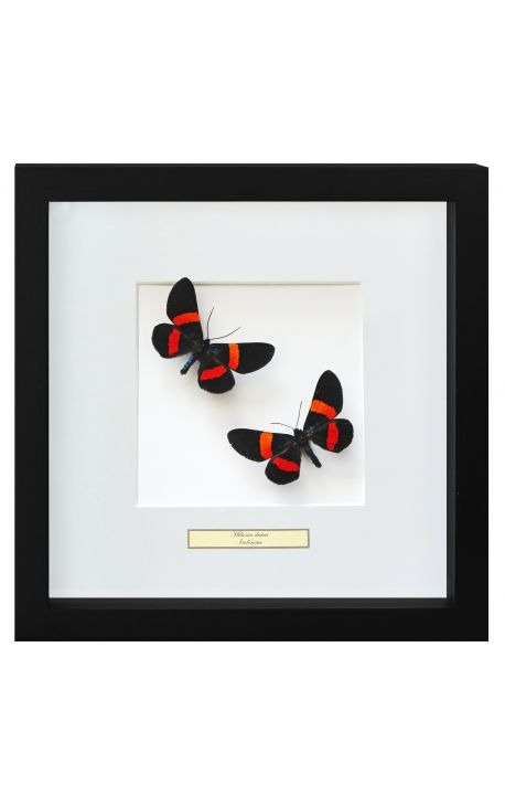 "Decorative frame with two butterflies ""Miliona Drucei"""