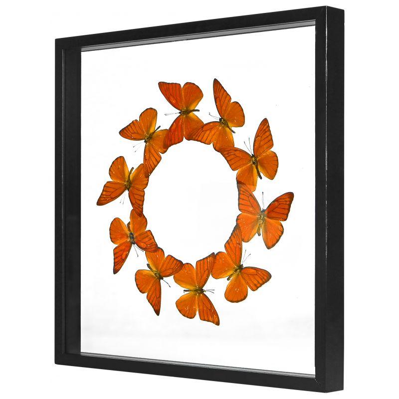 cadre d coratif avec ronde de papillons appias nero galba. Black Bedroom Furniture Sets. Home Design Ideas