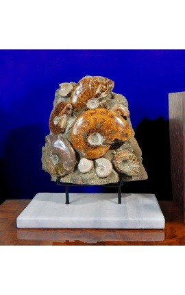 Large block of ammonites on white marble support (Bloc 1)