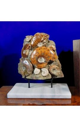 Большой блок аммонитов на белой мраморной подставке (Блок 1)